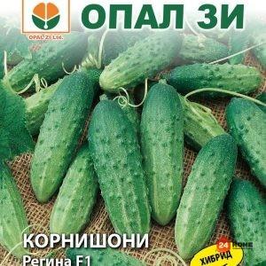 Корнишони-регина-1_02