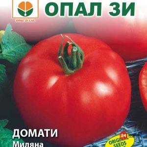 домат-миляна_02