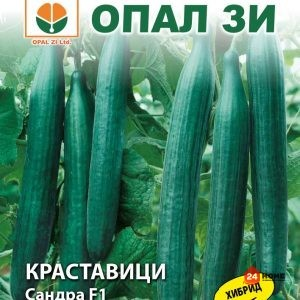 краставици-сандра-ф1_02